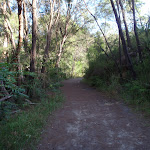 The Two Creeks Track (130108)
