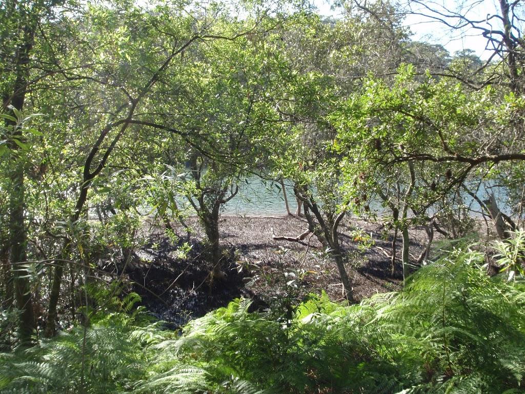 Passing around some mangroves