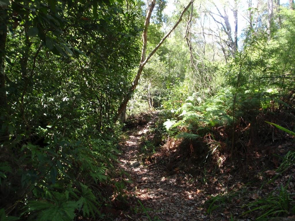 Heading through the thick bush