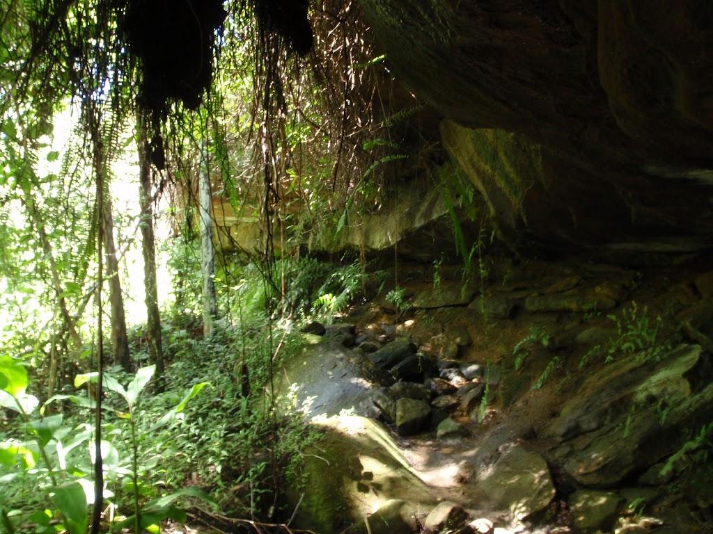 Casuarina track cave