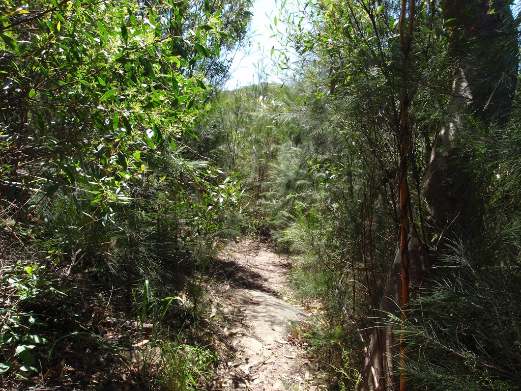 The Casuarina Track