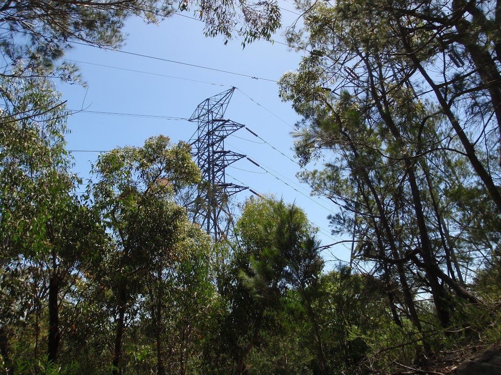 View of power lines from Casuarina Track