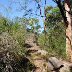 Casuarina Track (131914)