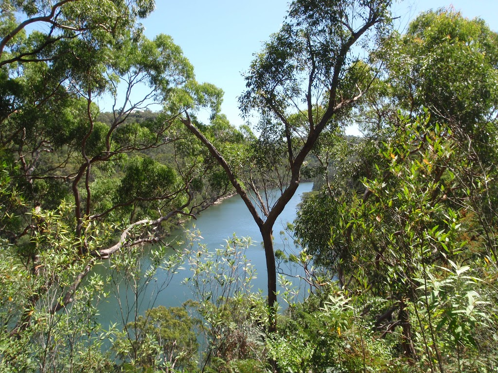 Middle Harbour Creek from Casuarina track