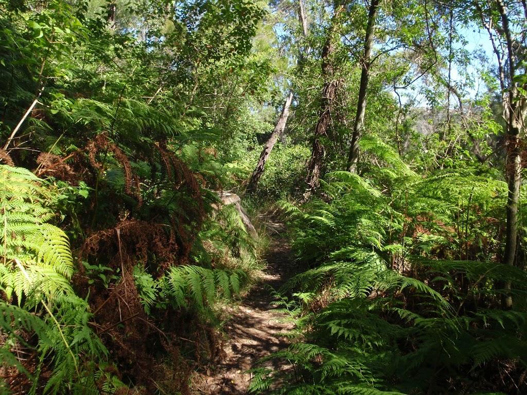 Ferns near Davidson Park on Magazine track