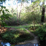 Small creek on Magazine Track (133894)