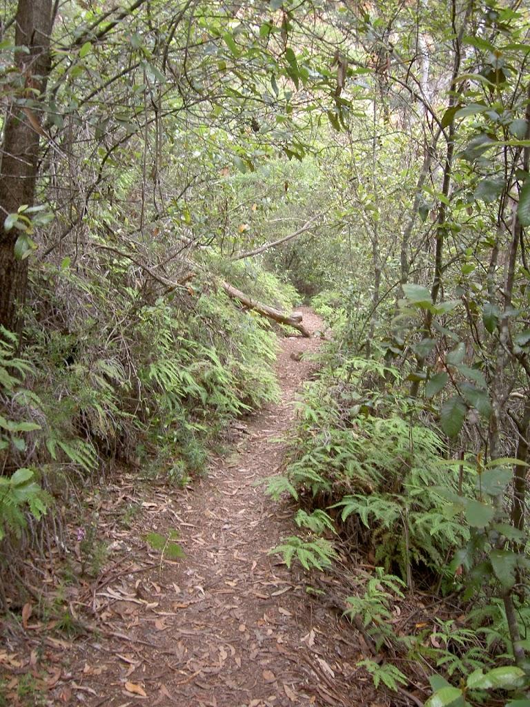 Collier's Causeway