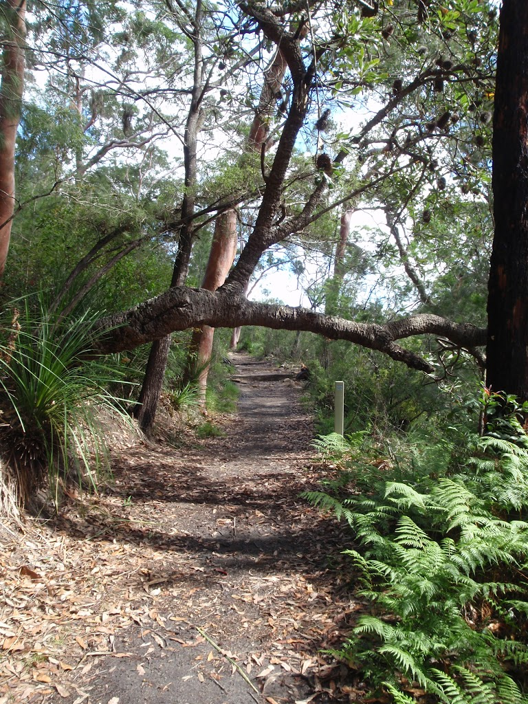 Two Creeks track near Ormonde Road track