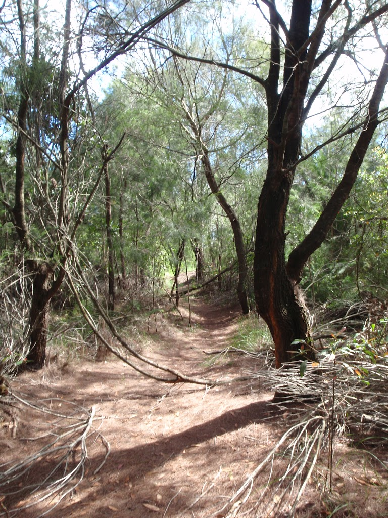 Track through bush (134965)