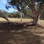 Campsite near tree