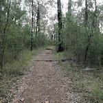 Pisgah Rock track (143628)