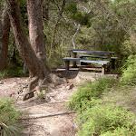 Braeside picnic area (14365)
