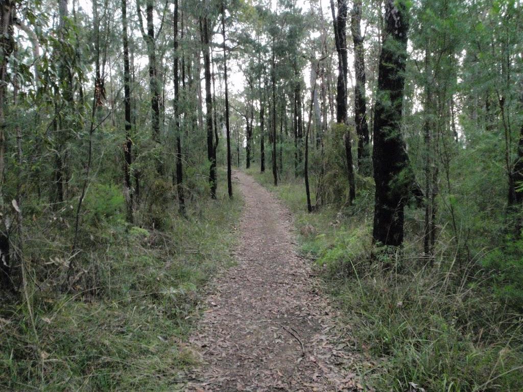 Winding through the She Oak near Pisgah Rock