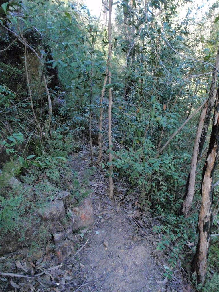 Track near Erskine Creek