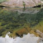 Pool on Erskine Creek