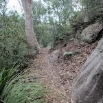 Along the Jack Evans track (144717)