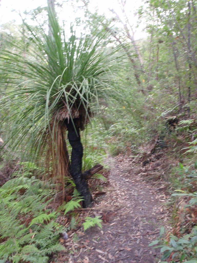 Grass tree next to track to Red Hands Cave
