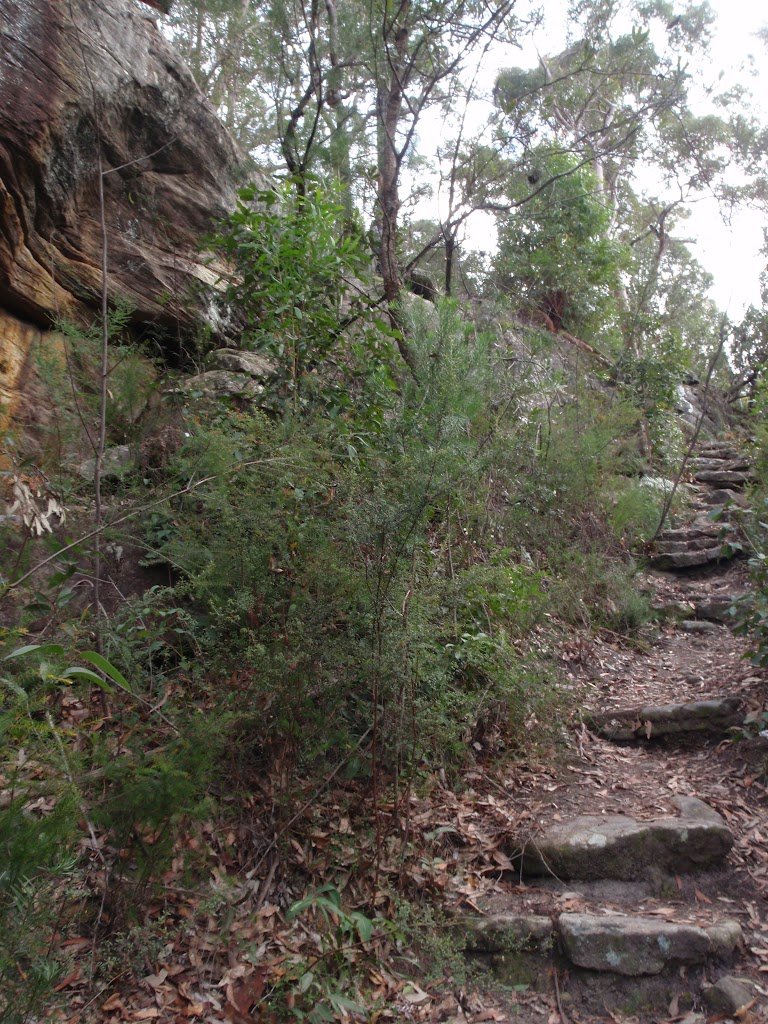 Steps below Lawsons Lookout (146376)