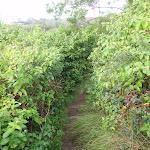 Bushtrack through weeds (146676)