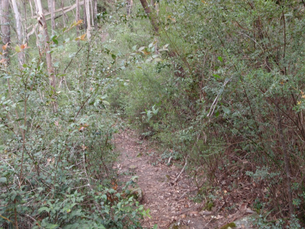Track in Magdala Gully (147108)