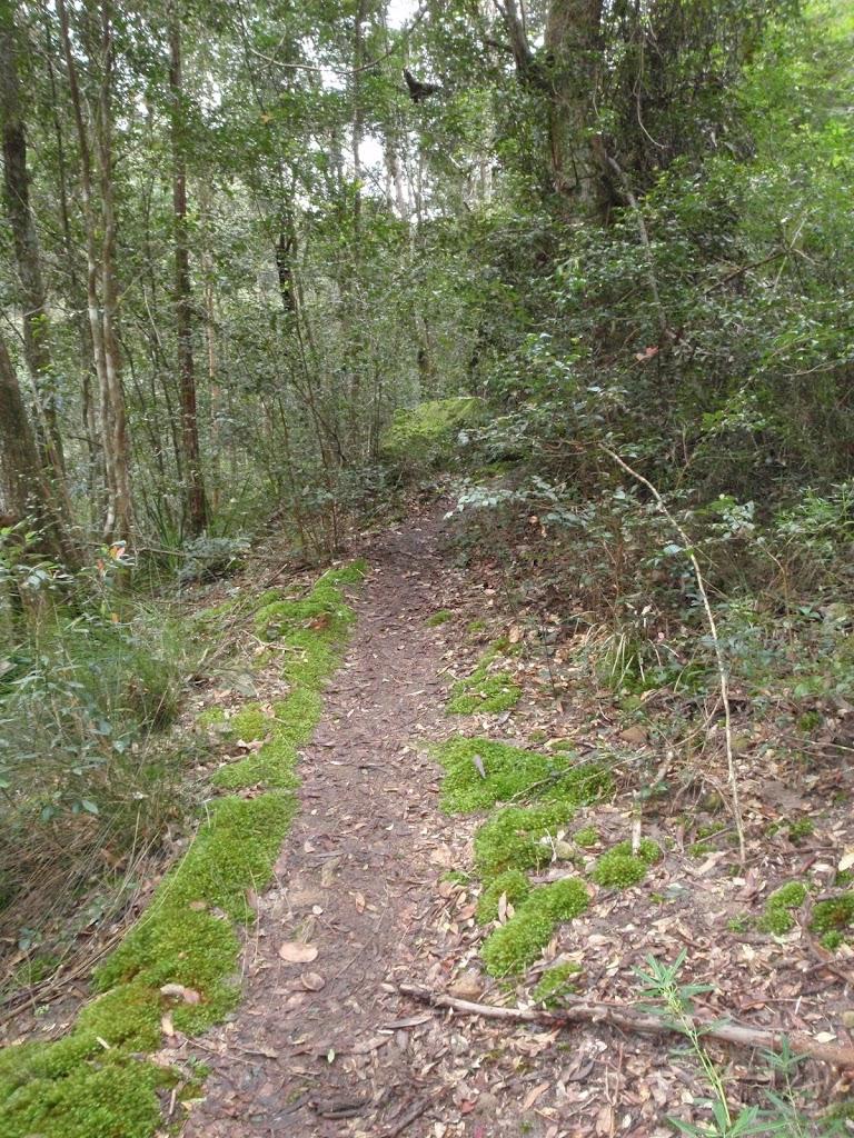 Moss lining track