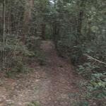 Sassafras Gully Track (147555)