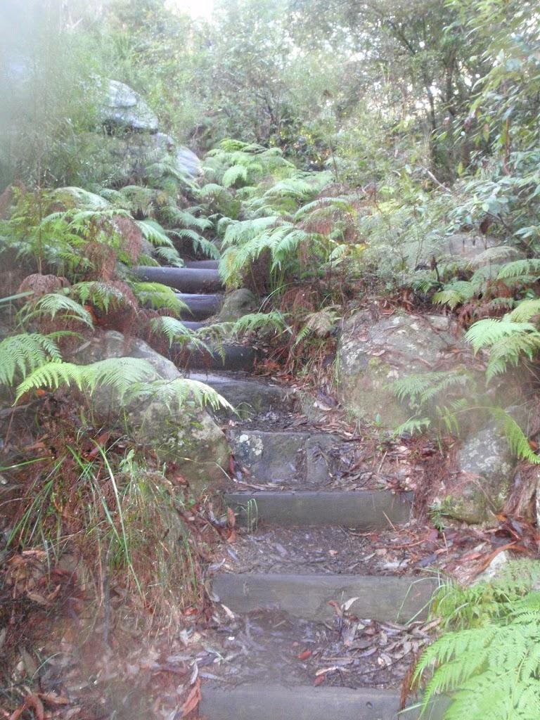 Glenbrook Gorge Track steps (148089)