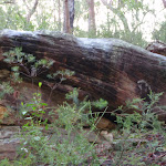 Rock outcrop next to track