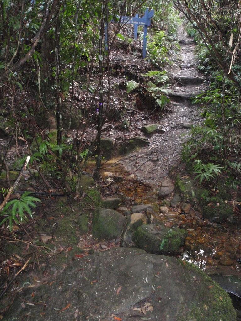 Track across creek