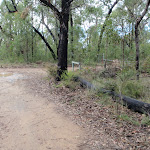 Nepean Lookout fire trail