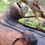 Log fallen on dam