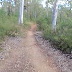 Track to Ironbarks Picnic Area (151638)