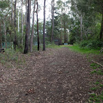Blackwattle trail (152656)