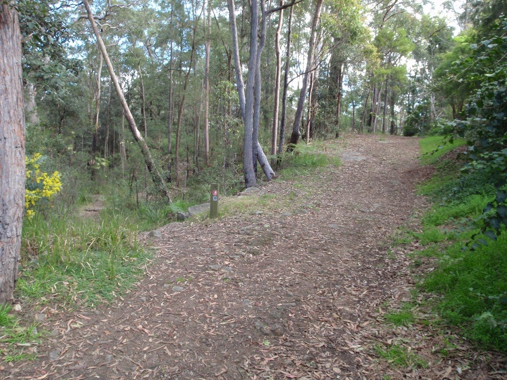 Blackwattle management trail (152710)