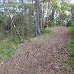 Blackwattle management trail