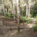 Steps near Disturbed creek