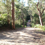 Gully crossing on Blackwattle trail (152785)