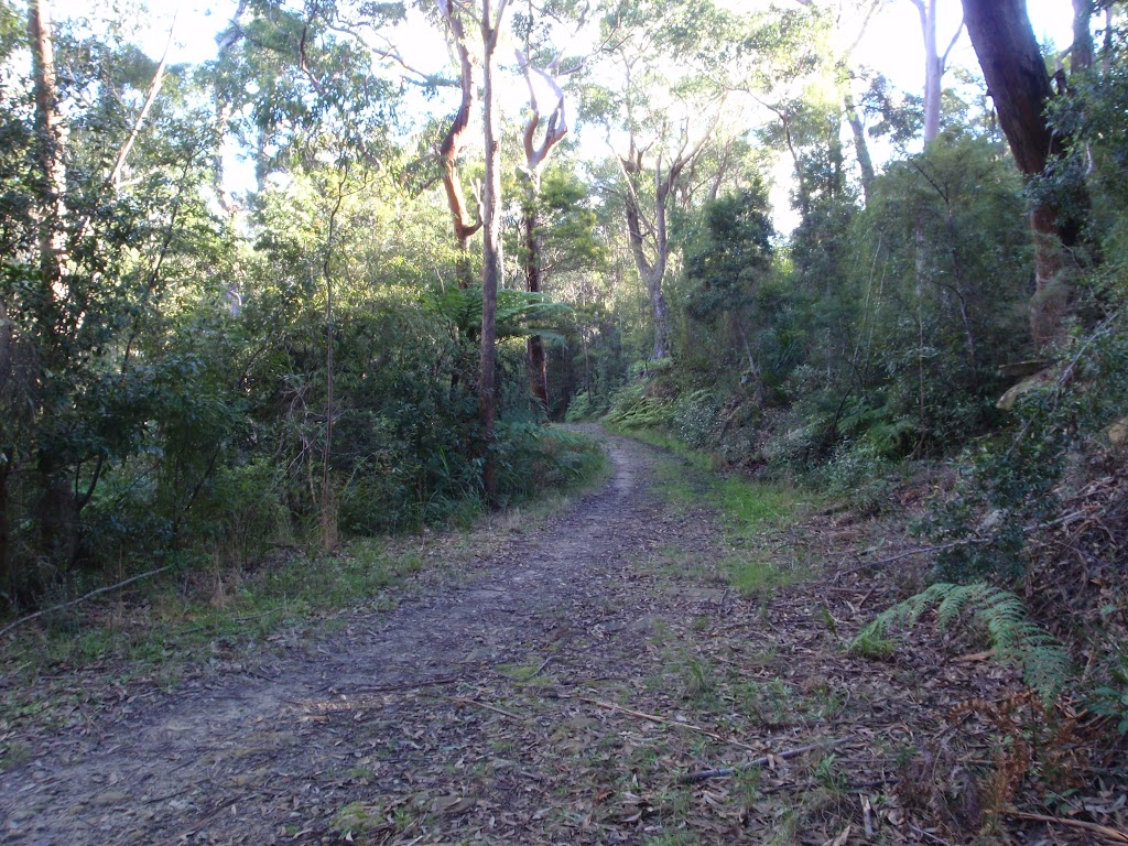 Blackwattle management trail east of Blackwattle Place