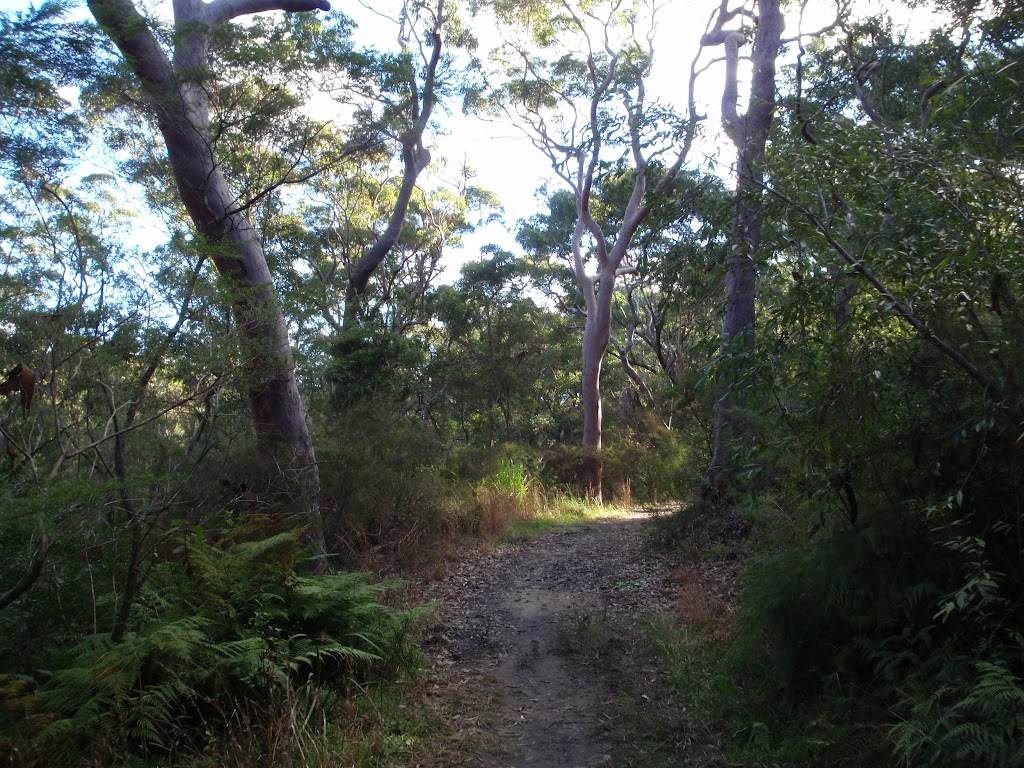 Ferns and forest on the Blackwattle trail