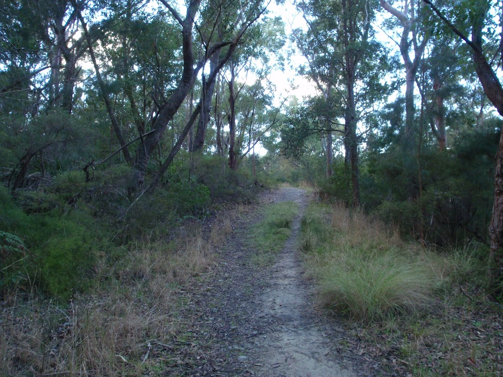 Blackwattle trail near Appletree Drive (152917)