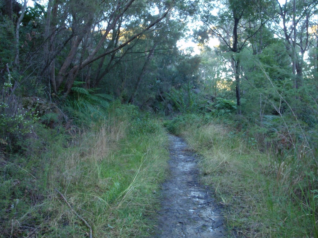 The trail near Daphne Pl