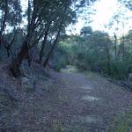 Forest on the fringe of Cherrybrook