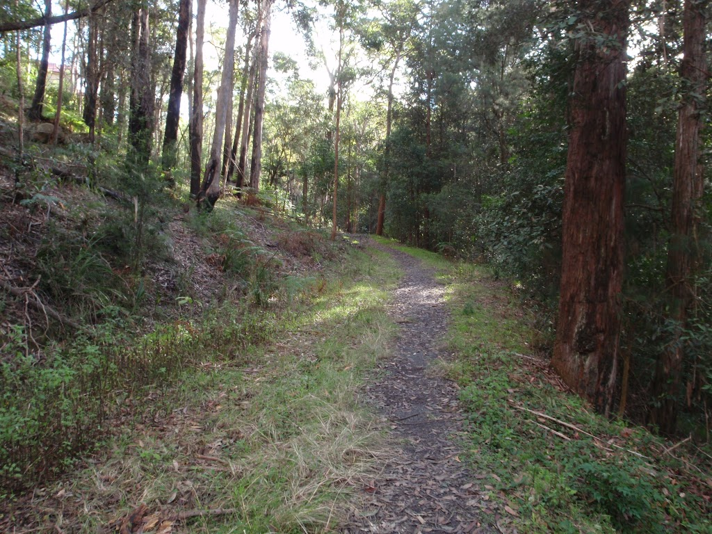 Track along an overgrown management trail