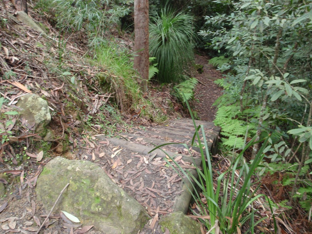 Well formed steps on the Callicoma Walk