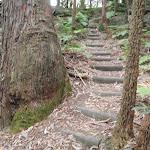 Easier walking (154642)