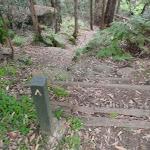 Track marker on the Callicoma Walk (154651)