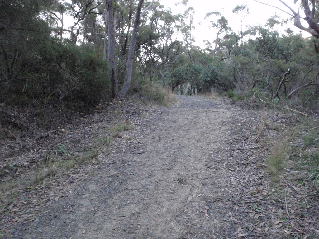 Management trail near the Jungo