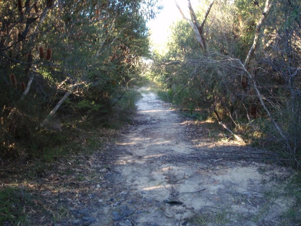 Dense heath along the Salvation Loop track