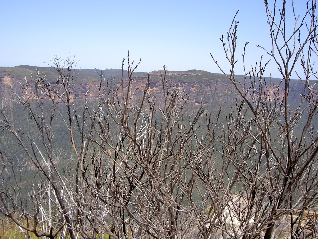 View over bush into the Grose Valley