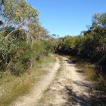 Easy walking on the Salvation Loop track (156076)